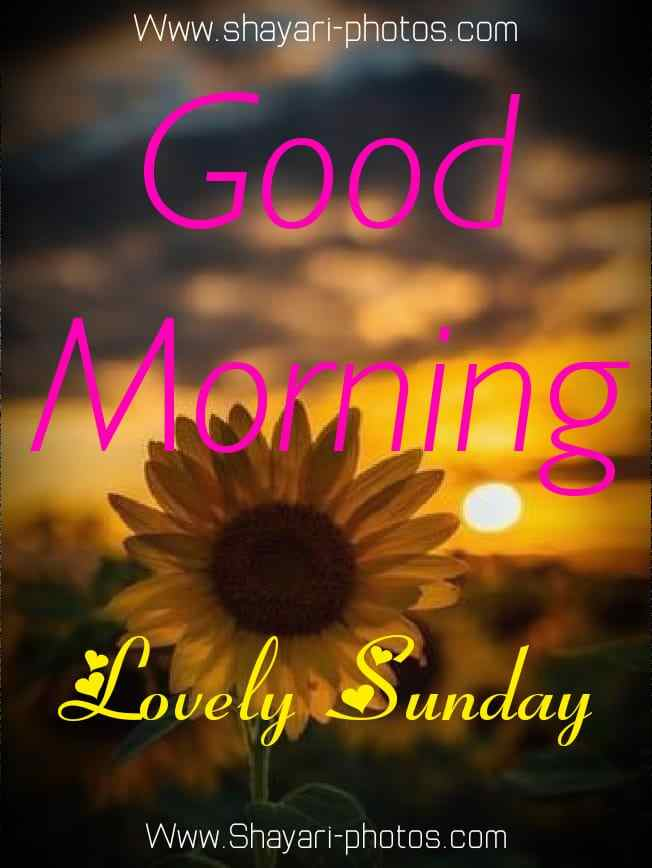 Good Morning Happy Sunday Photos Download HD | 100+ Images Gm